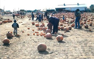 48pumpkinpatch